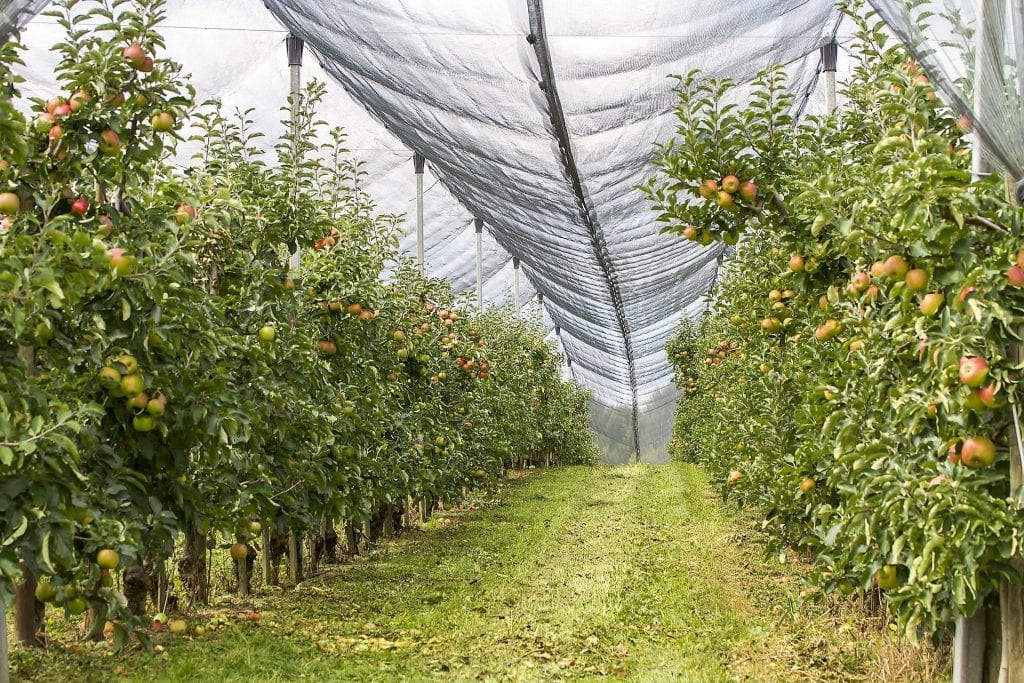 Protivgradna mreža u zasadu voća